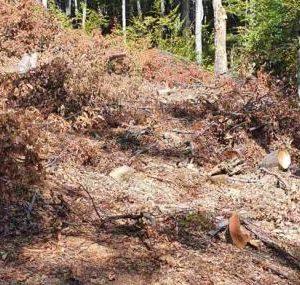 ВАП разследва сеч на вековна гора край Котел